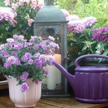 Spruce up your Balcony Garden During Festivals